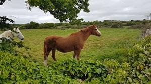 Farm required in Sligo or Donegal area