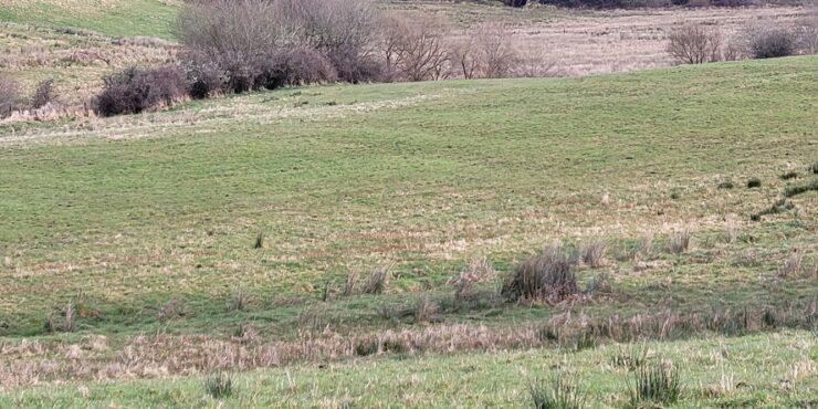 Tubbernannia Ballintogher Co. Sligo  Agricultural Land For Sale  C. 30 acres (12.14 hectares).